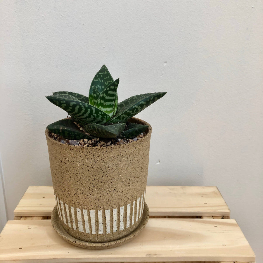 raw groove planter - speckled stoneware
