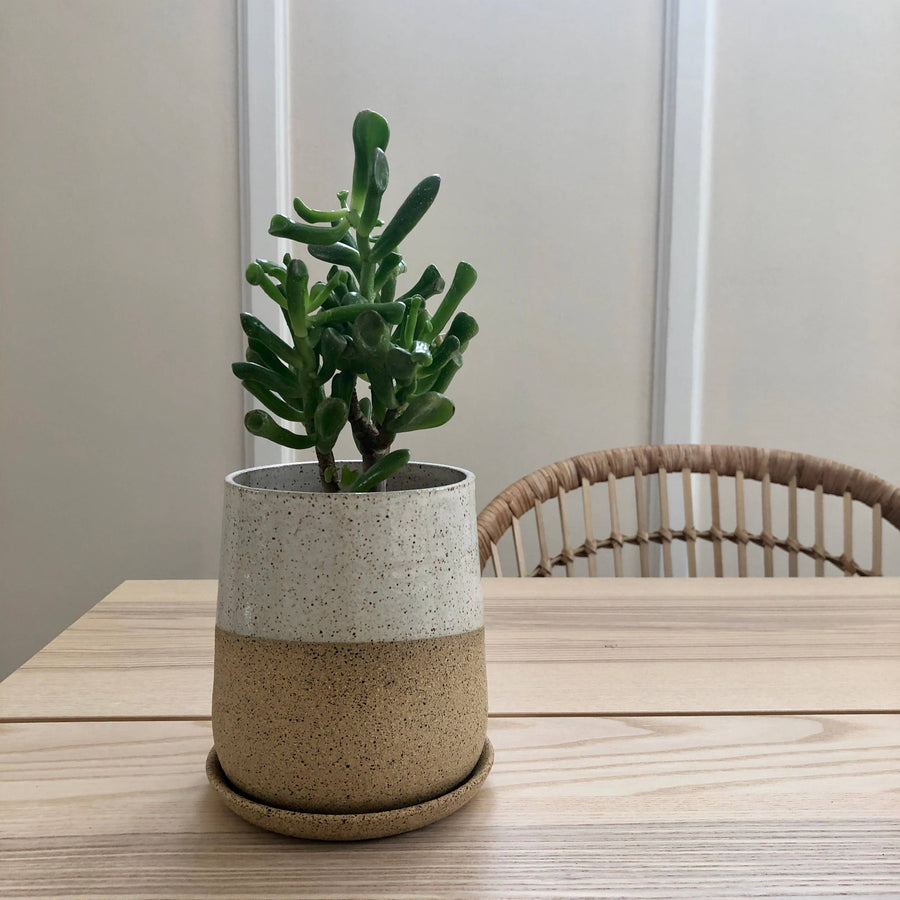 form planter no. 2 in speckled stoneware