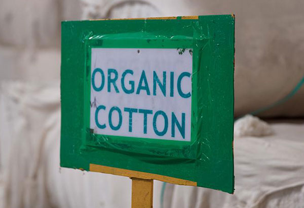 Alterra Pure Organic Cotton