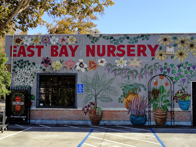East Bay Nursery plant store cool mural of flowers