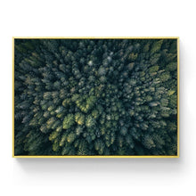 Fresh Forest Canvas Prints