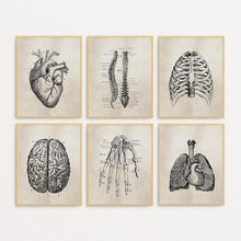 Human Anatomy Science Canvas Print