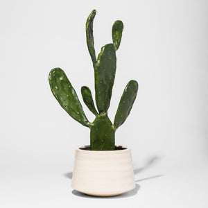 20 Target Must-Haves for Cacti Lovers!