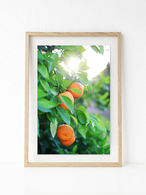 Orange Grove Printable