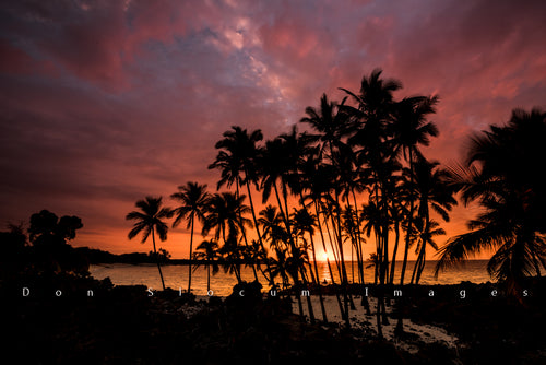 Sunset Palms by Don Slocum
