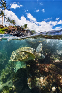 Honu's World by Andrew Shoemaker