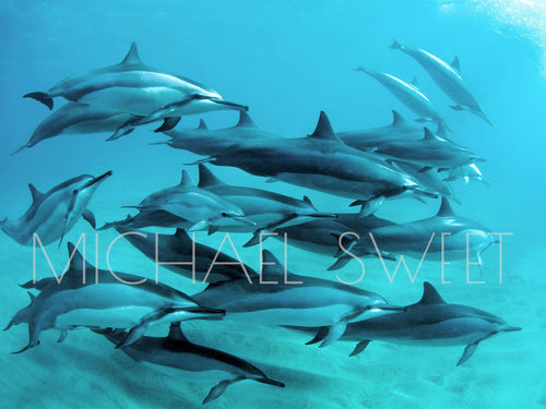 Dolphin Paradise by Michael Sweet
