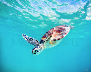 Baby Honu by Michael Sweet