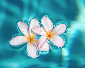 Aqua Plumeria by Michael Sweet