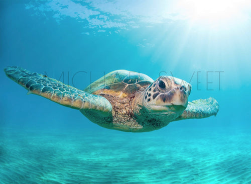 Honu Flare by Michael Sweet