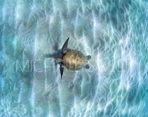Honu Infinity by Michael Sweet