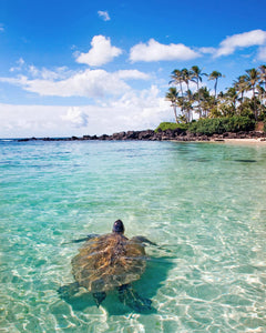 Turtle Bay by Michael Sweet