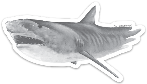 Tiger Shark Decal