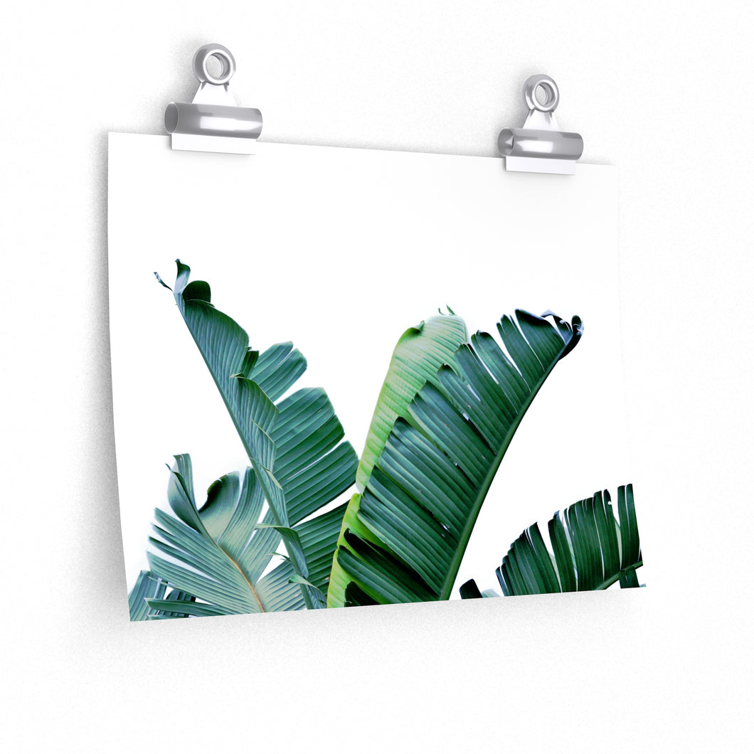 tropical banana leaf art print