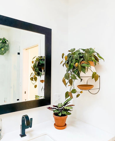 clean your air at home with plants holistic habitat