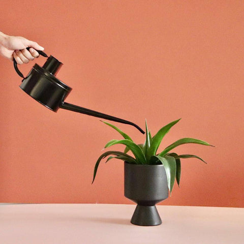 Hand watering a plant with a black watering can