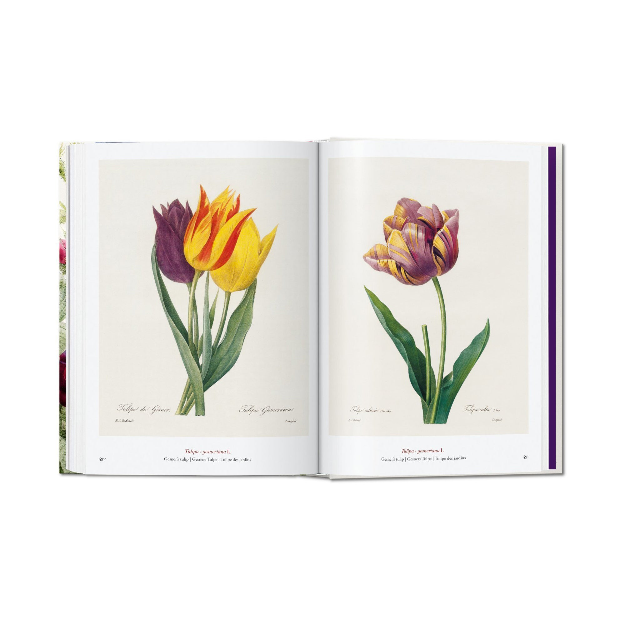 Redouté. Book of Flowers. 40th Aniversary Edition