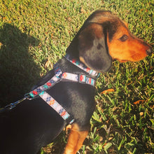 Argyle Dog Collar