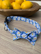 Blue Daisy Dog Collar