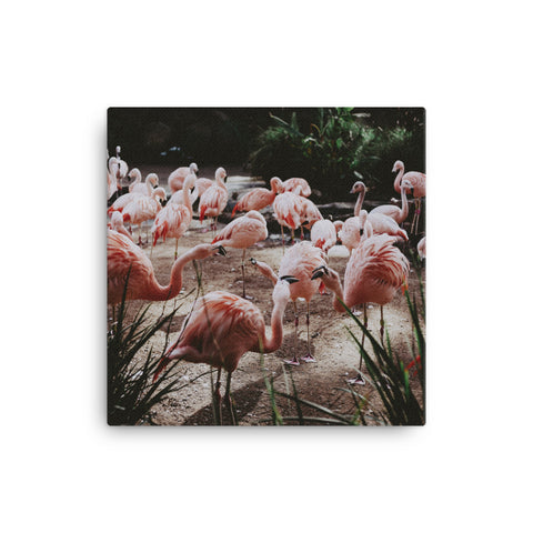 Image of Flamingos Canvas - CalvinMade