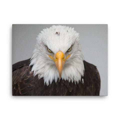 Image of Pissed off eagle Canvas