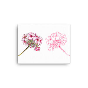 Pelargoniums Canvas - CalvinMade
