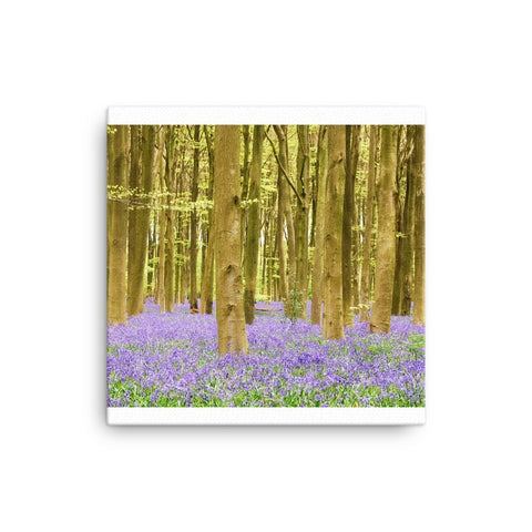 Image of Bluebells Canvas