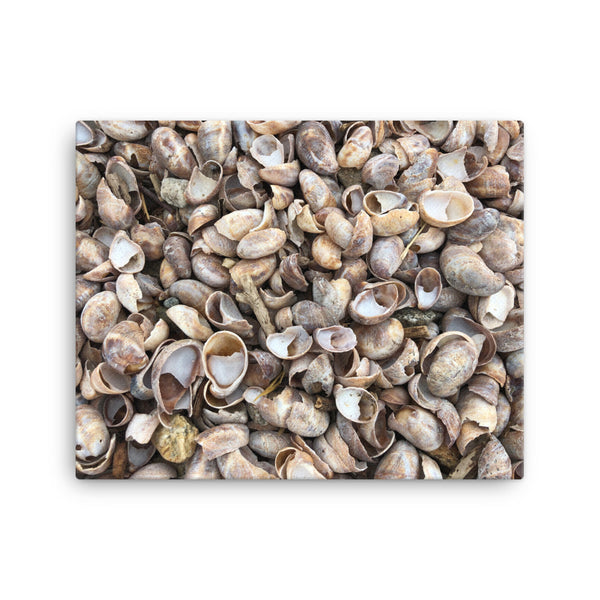 Sea Shell Canvas - CalvinMade