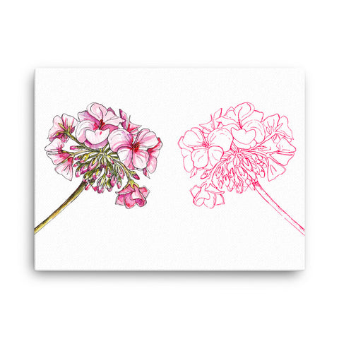 Image of Pelargoniums Canvas - CalvinMade