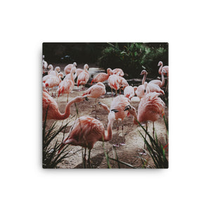 Flamingos Canvas - CalvinMade