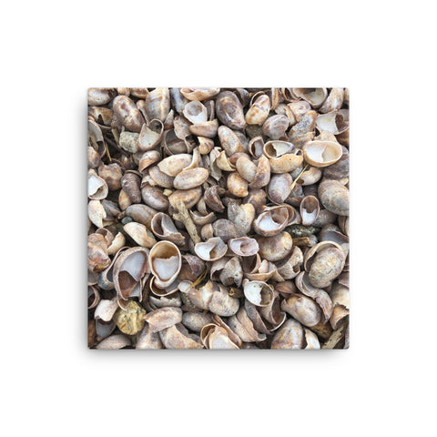 Image of Sea Shell Canvas - CalvinMade