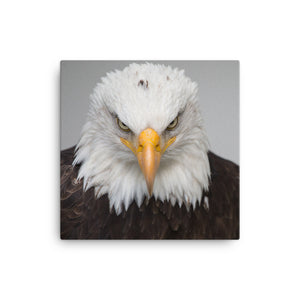 Pissed off eagle Canvas