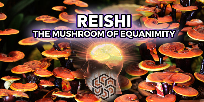 Reishi: The Mushroom of Equanimity