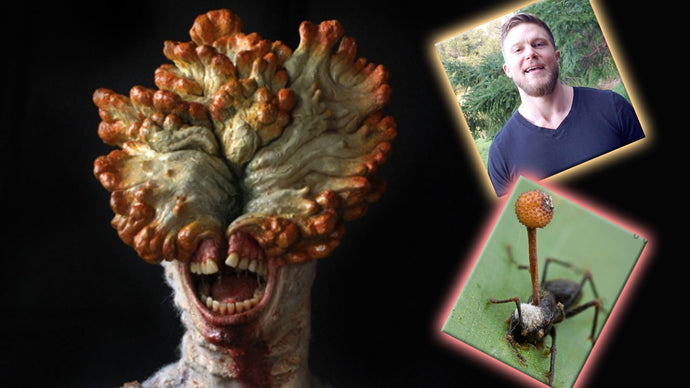 Can Medicinal Mushrooms Turn You Into a Zombie?