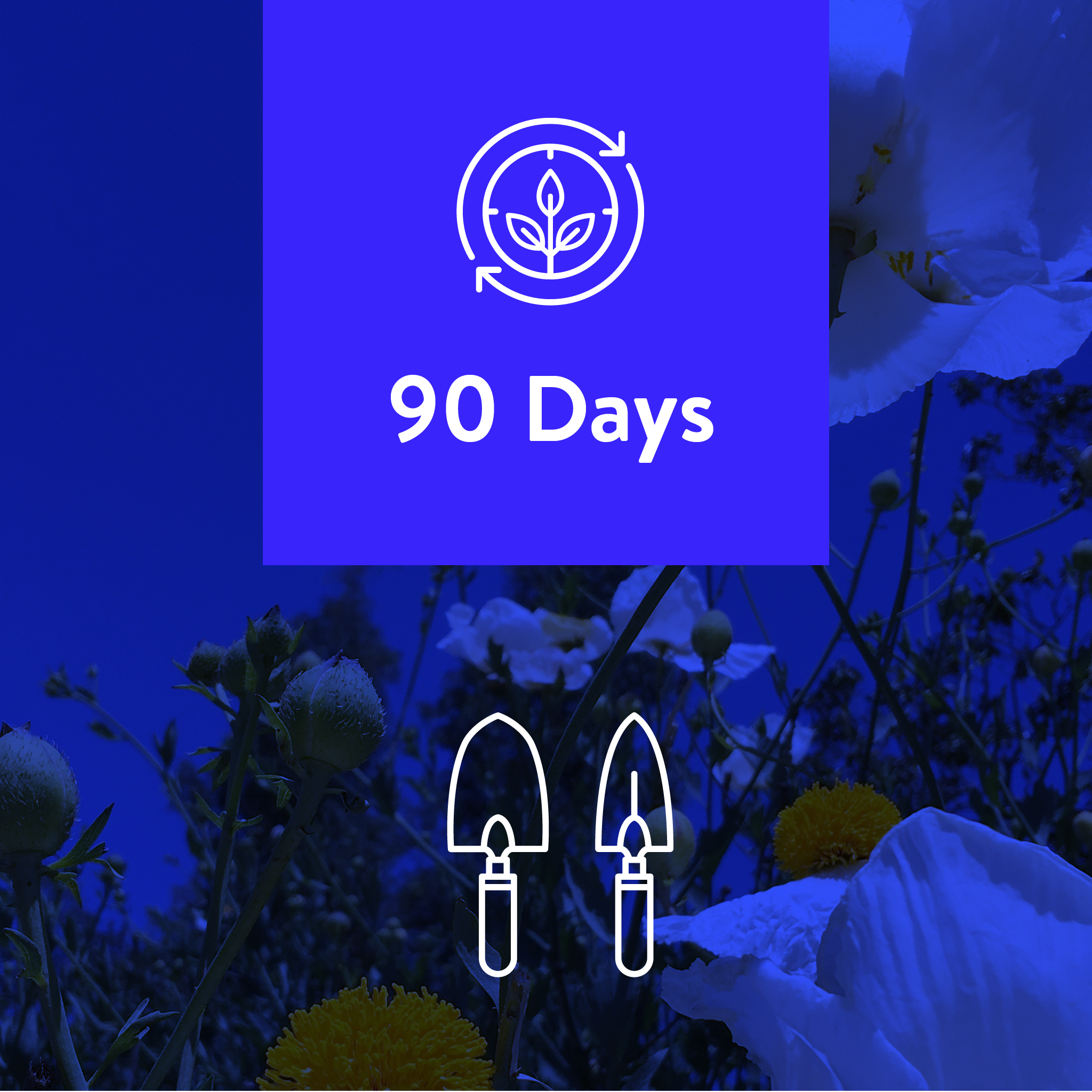 90-Days, 2 Projects