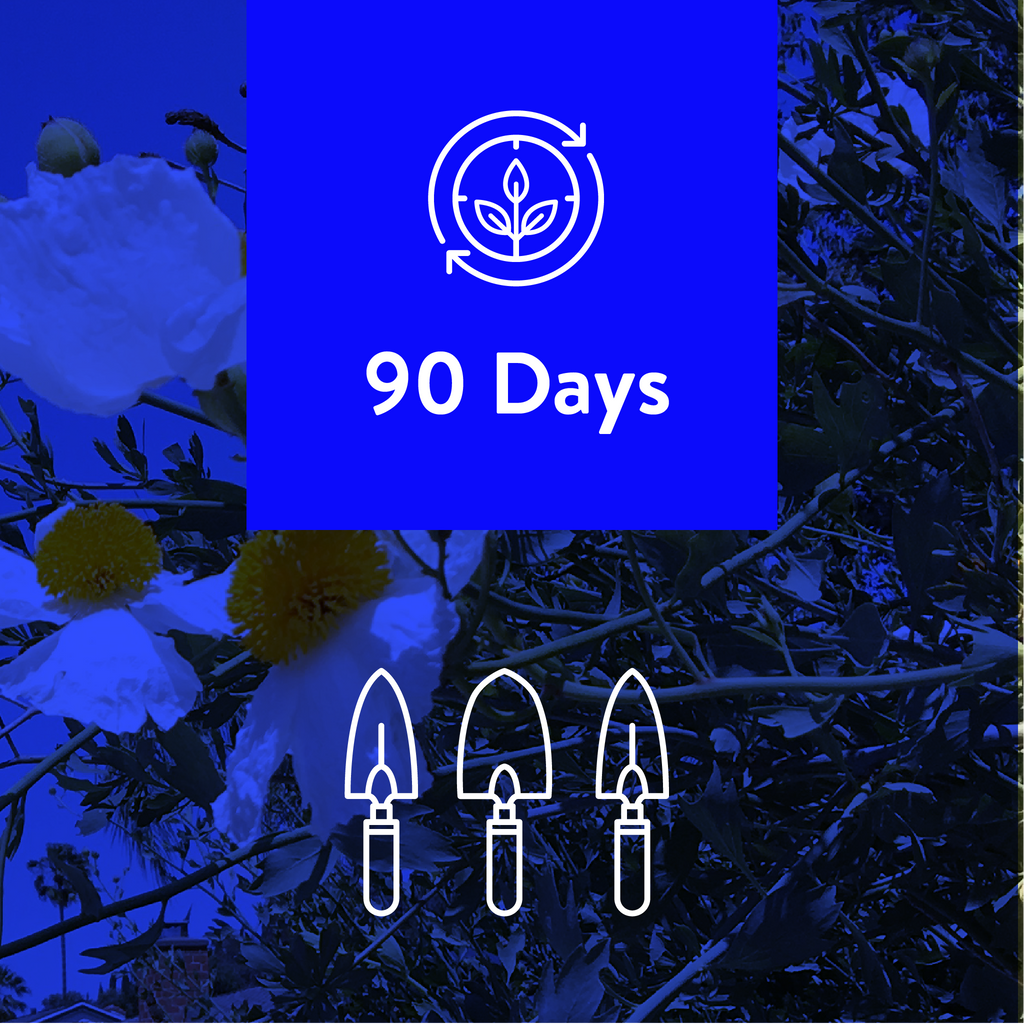 90-Days, 3 Projects