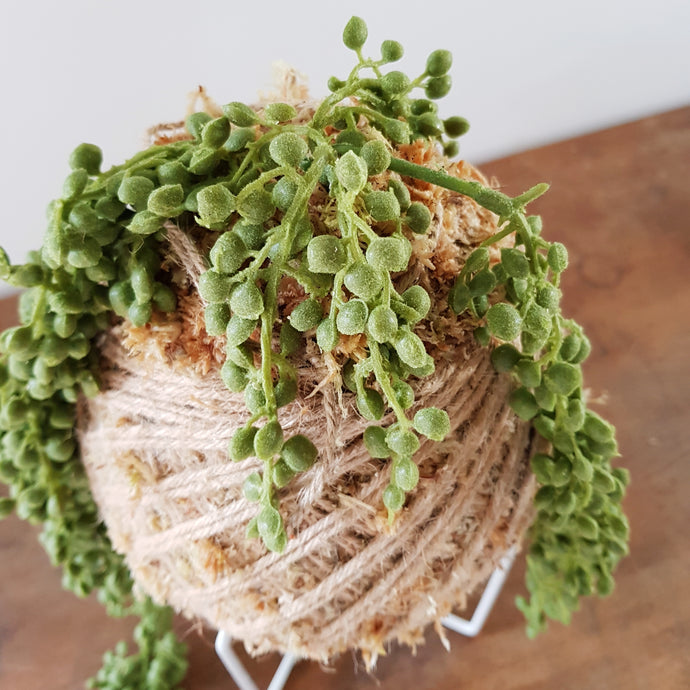 Artificial String Of Pearls Kokedama