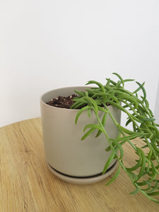 Medium Oslo Pot Sage