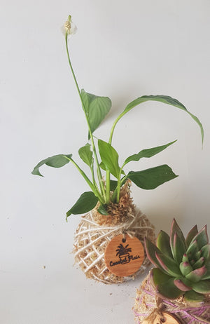 Mini Foliage Kokedama