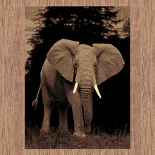 Picture Collection Elephant