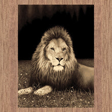 Picture Collection Lion