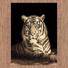 Picture Collection Tiger
