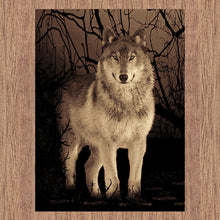 Picture Collection Wolf