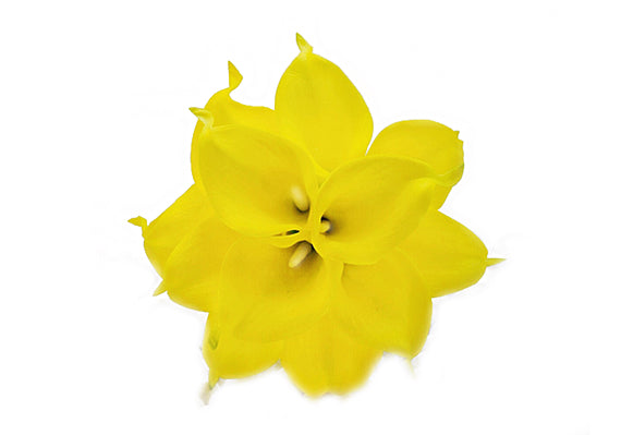 Stemple Real Touch Artificial Flowers Calla Lilies Yellow Calla Lilies by the stem. Great prices, free domestic shipping.