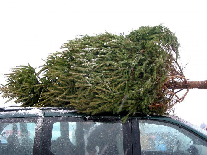How to Tie Down a Christmas Tree Without Damaging It! | WRAPTIE