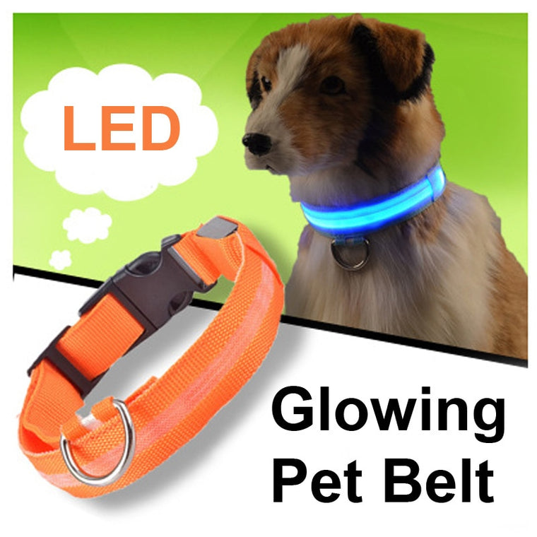 LED Collar - 21 Miracles