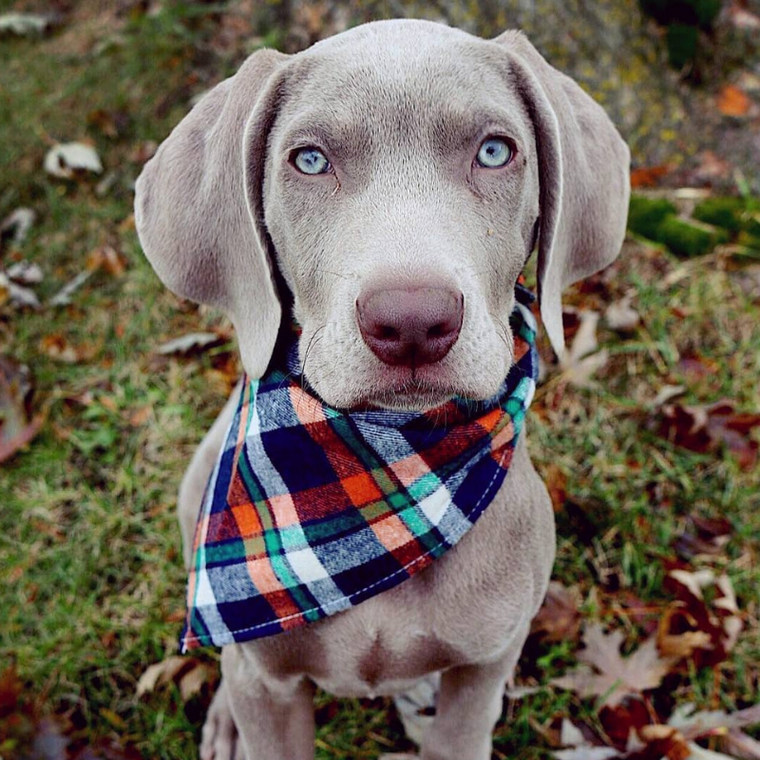 Flannel Bandanas - 21 Miracles