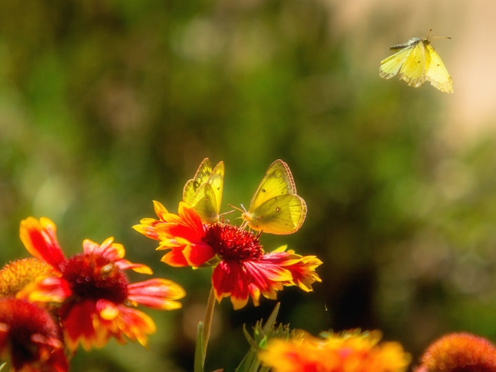 How to get your Garden buzzing and humming