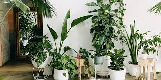 Amazing Tropical plants to make your home feel the summer vibe during quarantine