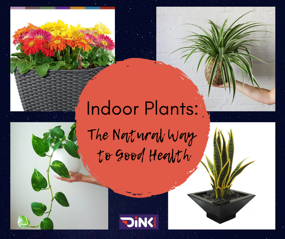 THE HEALTH BENEFITS OF INDOOR PLANTS